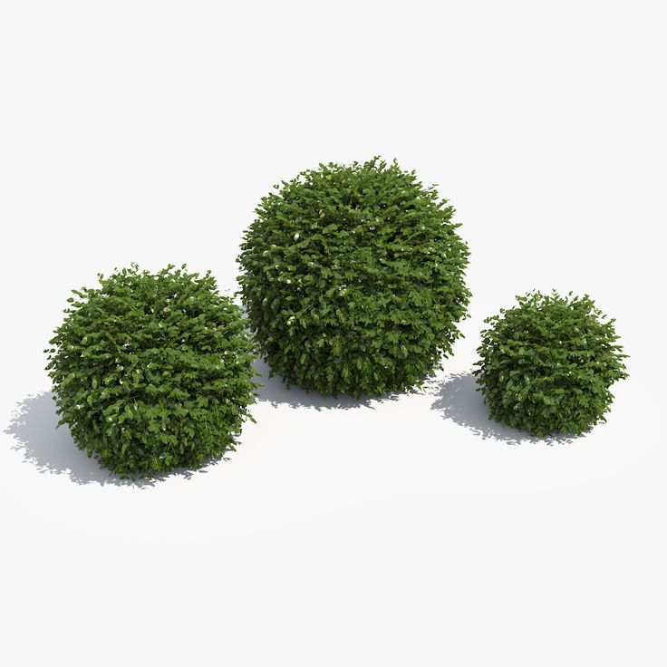 3d model ball boxwood box set /  3д модель набор шаров самшита / plant box shrub garden topiary park bush nature foliage leaf boxwood buxus architecture visualization exterior 3d rounded green set collection ball  растение куст кустарник сад топиари парк природа листва самшит живая изгородь круглый шар коллекция
