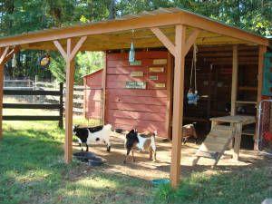 I like this goat house too