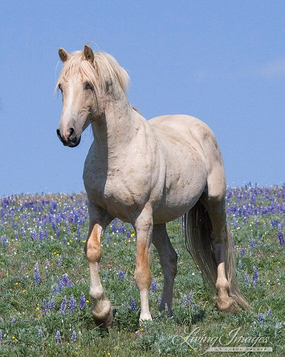 Cloud Walks in the Flowers Fine Art Wild Horse by Carol Walker www.LivingImagesCJW.com