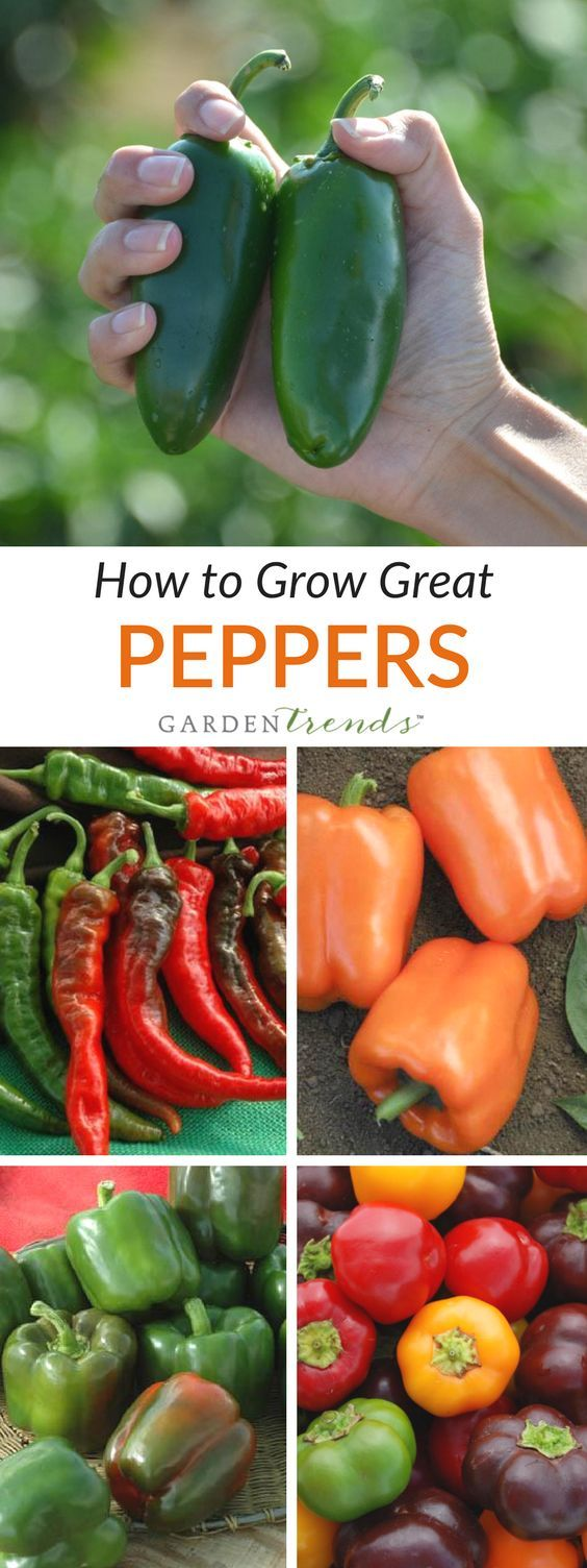 how to grow bell peppers from seed video
