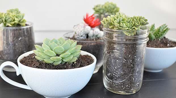 Un mini jardin dintérieur Tutos et conseils jardintasses