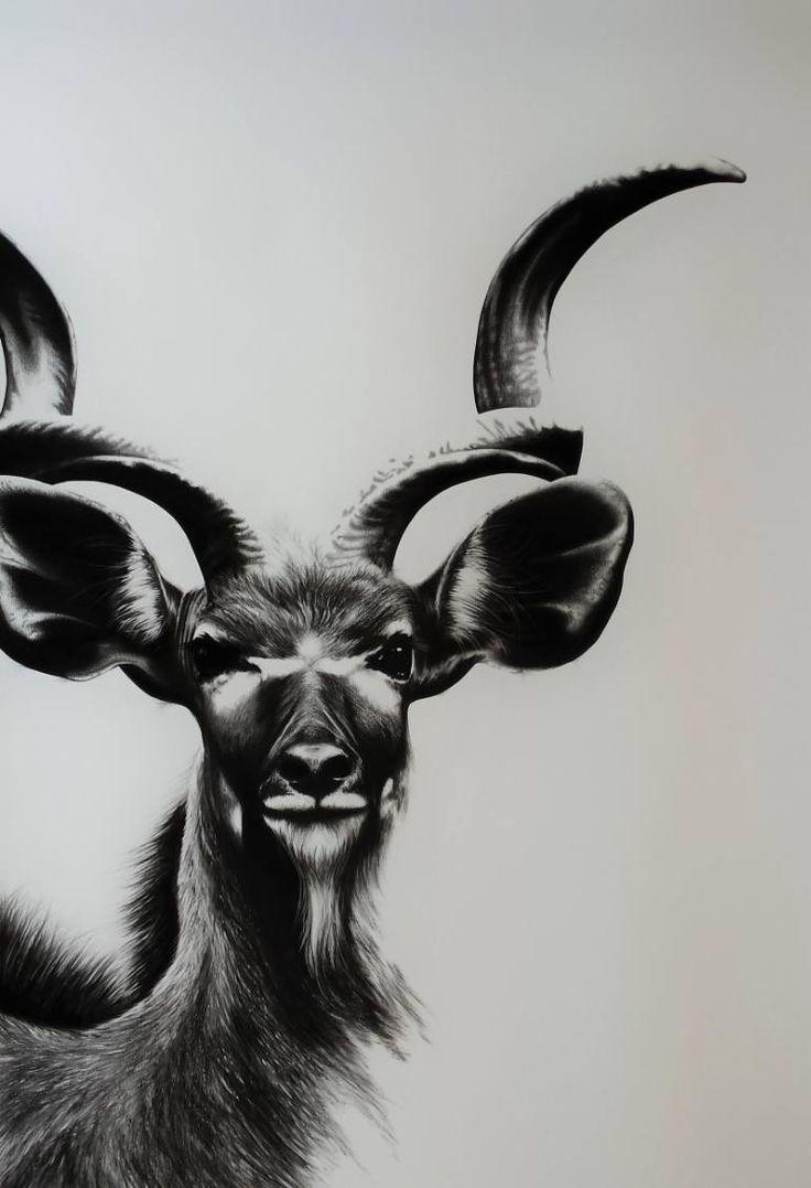 """Saatchi Art Artist Ira van der Merwe; Drawing, """"Kudu Study IIII"""" #art"""