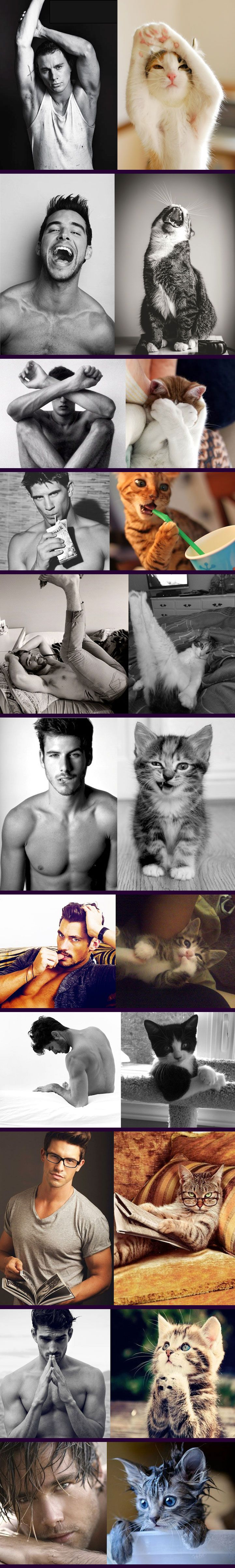 My Cat Does It Better Than You! - Hot guys n cats. Why has no one thought of this before?!