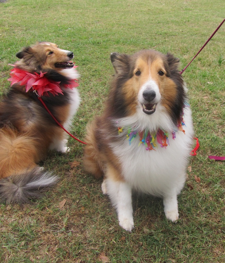 Lovely ladies, Sadie & Lucy
