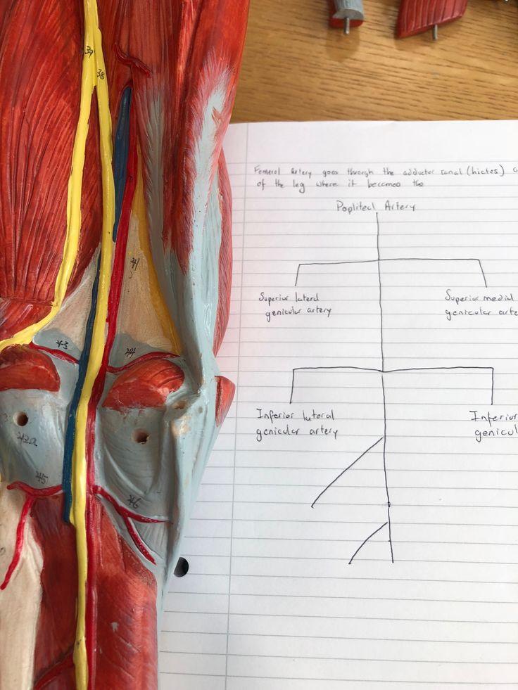 42 best Podiatry images on Pinterest | Anatomy, Anatomy reference ...