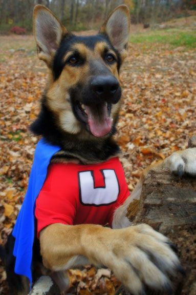 How To Make Underdog Costume For Dogs