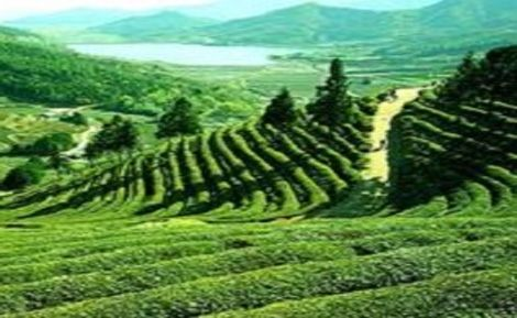 Our organization counted as one of the leading service provider engaged in rendering superior quality Travel Consultant Services to our valuable clients. Widely appreciated by our customers, these services are provided by our experienced team members who are perfect in this field. Our prices are affordable and our Travel Consultant Services are outstanding. We are Tour Operators For Darjeeling... http://www.ankurtravels.com/