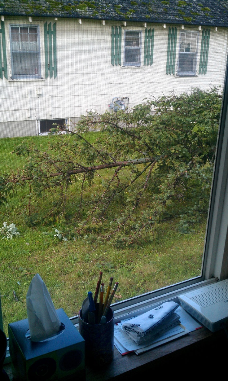 And another view from our office/dining room window. This is the top of the tree near the back of the house. The tree stump is in the front yard.Tree Stumps, Room Windows, Front Yards, Offices Dinning Room, Office'S Dinning Room, Trees Stumps