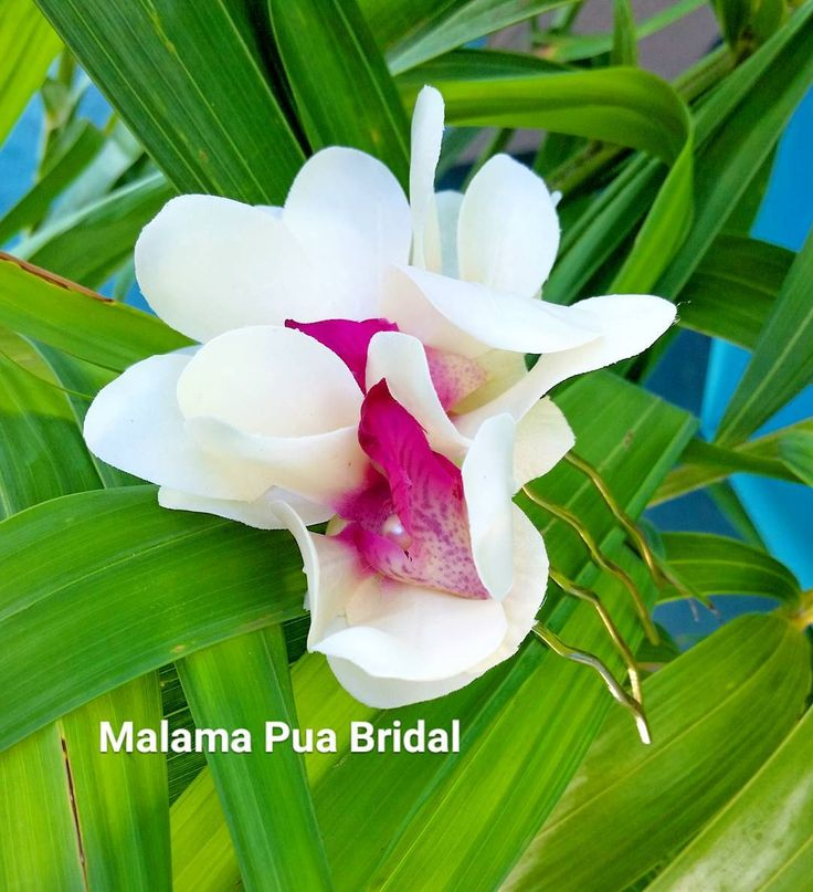 25 Best Ideas About Vanda Orchids On Pinterest Cattleya Orchid Unusual Flowers And Orchid