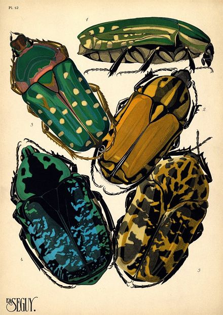 art of the beautiful-grotesque: Visions of the Undergrowth : Vintage Insect Illustration