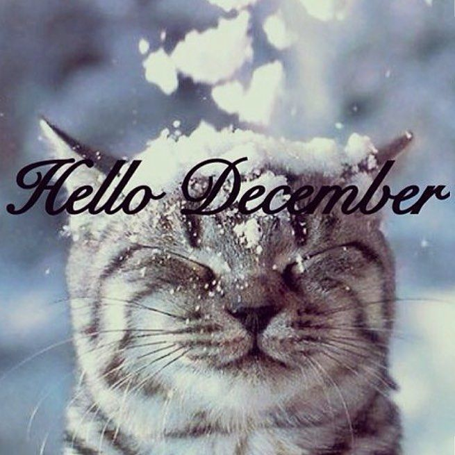 Hello December Cute Cat In the Snow