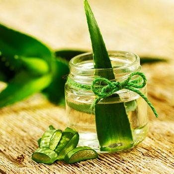 Настойки с алоэ: рецепты, как сделать настойку алоэ для лечения желудка и от кашля