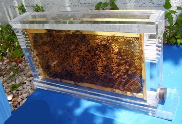 Clear Acrylic Observation Beehive Humming Hives