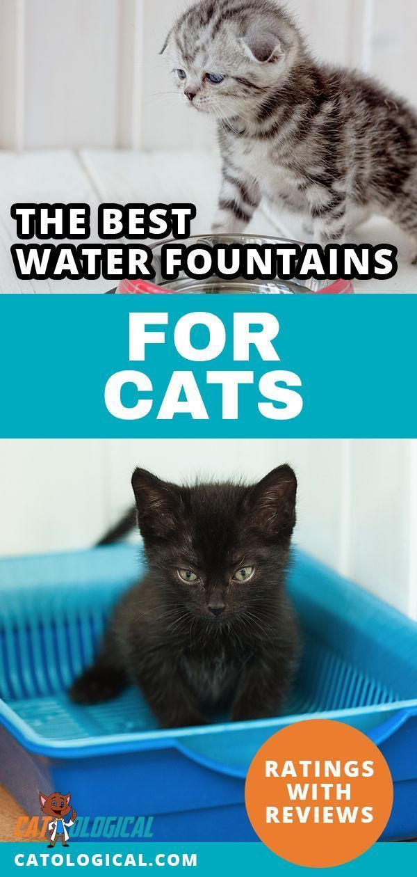 What Are The Best Drinking Fountains For Cats Stainless Steel Or Ceramic Bowls Maybe Diy Or Homemade Products Maybe Cat Water Fountain Cat Care Cat Grooming