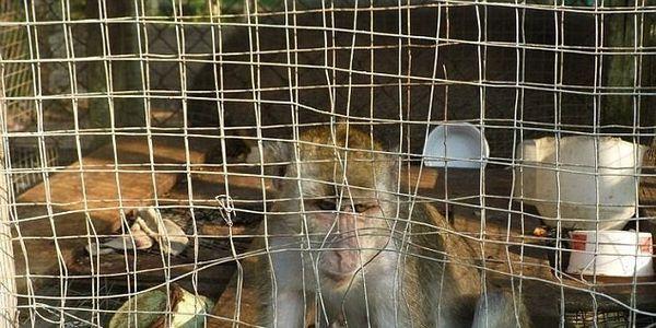 Demand an End to the Yuk Chin Mini Zoo, Tawau NOW!!