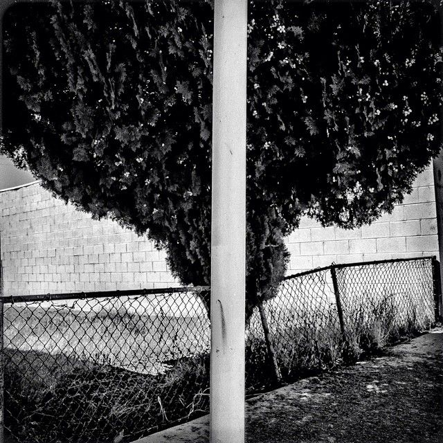 """Tree. Poplar, CA. 36°3'12""""N 119°8'35""""W #geographyofpoverty  Poplar is a city in Tulare County, California, United States. The population was 2,470 at the 2010 census. Residents have a $16,777 per capita income and 37.6% live below the poverty level.   www.geographyofpoverty.com  (at Poplar, CA)"""