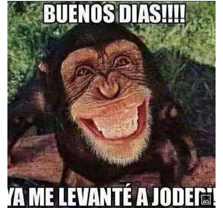 Pin De Nadir En Memes En 2021 Buenos Dias Buenos Dias Saludos Emoticones Para Whatsapp Gratis