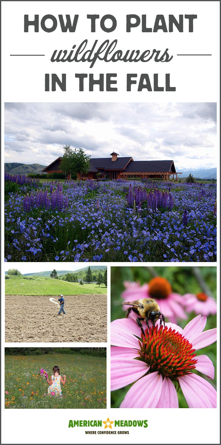 Fall is the perfect time to plant wildflowers! Learn everything you need to know about fall seeding in our planting guide.