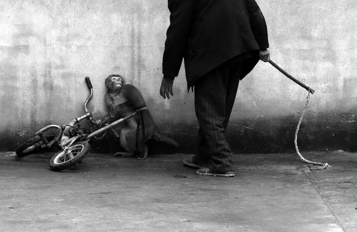Natura, 1° premio World Press Photo. Photo by: Yonghi Chju, China. Sunzhou, provincia di Anhui, Cina. Una scimmia da circo con il suo addestratore. Con più di 300 compagnie, Suzhou è conosciuta come città del circo cinese per eccellenza.