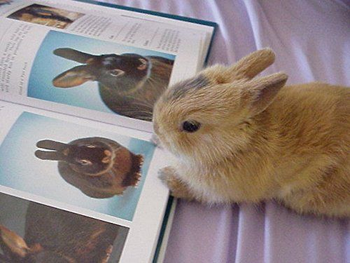 Bunny reading a book about bunnies