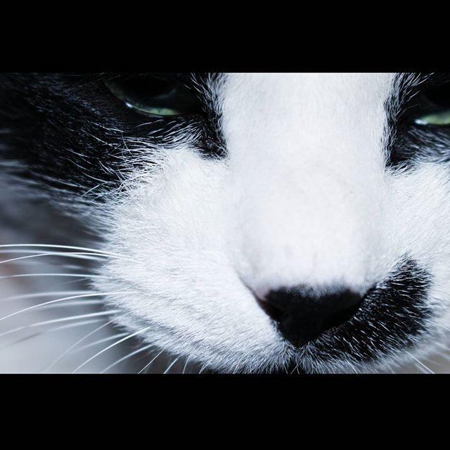 ㅤㅤㅤㅤㅤ ㅤㅤ ㅤㅤㅤㅤㅤㅤ サニ子 ㅤㅤㅤㅤㅤㅤㅤ ㅤㅤㅤㅤㅤㅤ #flashair #canoneoskissx7i #canon #写真撮ってる人と繋がりたい #写真好きな人と繋がりたい #ファインダー越しの私の世界 #韓国好きな人と繋がりたい #猫 #愛猫 #pictures #picture #cat #cats #camera #kpop #korea