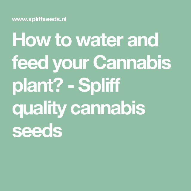 how to grow one weed plant cheap