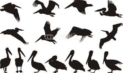 Pelican silhouettes - vector