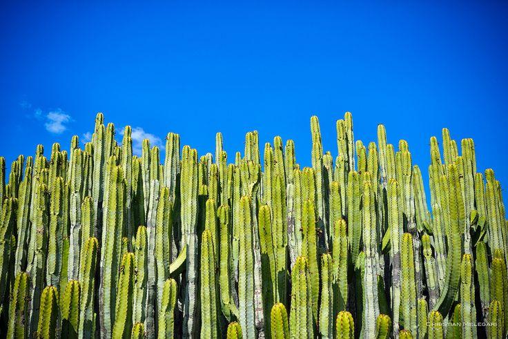 kaktus skyline - null