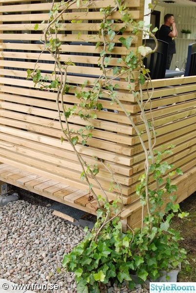 murgröna,altan,staket,plank,vindskydd