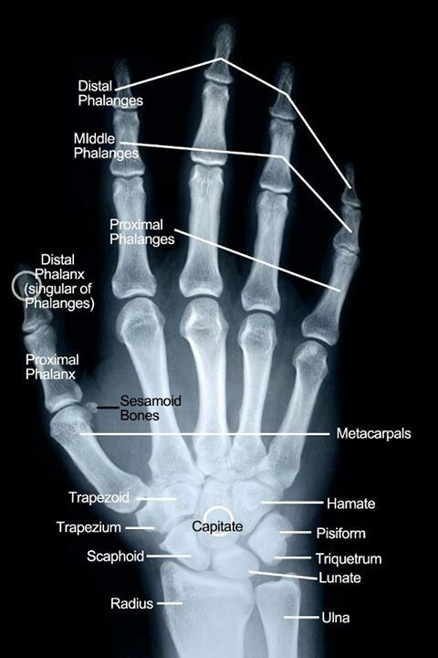 how to remember hand bones