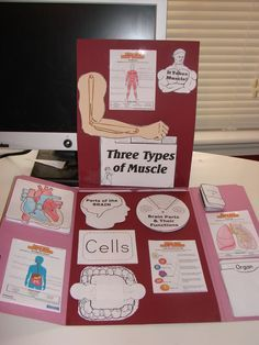 What a wonderful job!  This is a great example of what you can do with the Human Body Lapbook from In the hands of a Child!