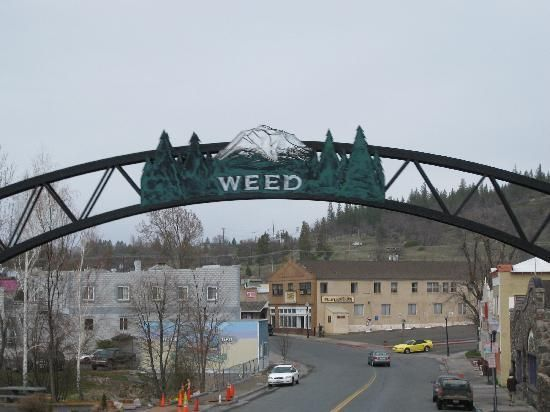 """Welcome to Weed, California  Home of Mount Shasta , Northern California, myths, legends, aliens, There are sulphur springs top of mountain California's Mystic Mountain  Legends  of the """"gold-tinted domes"""" are most likely sulphur-encrusted, dome-shaped rocks that can be found on the slopes of Shasta."""
