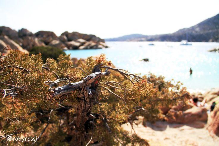 momenti di Cala Coticcio, Isola di Caprera - Gallura