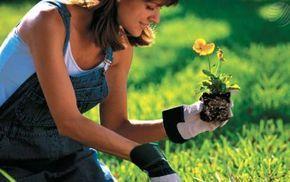 7 abonos caseros para las plantas - ¿Sabías que los abonos naturales son más efectivos y duraderos? Toma nota de estos 7 abonos caseros que ayudarán a tus plantas a crecer sanas.