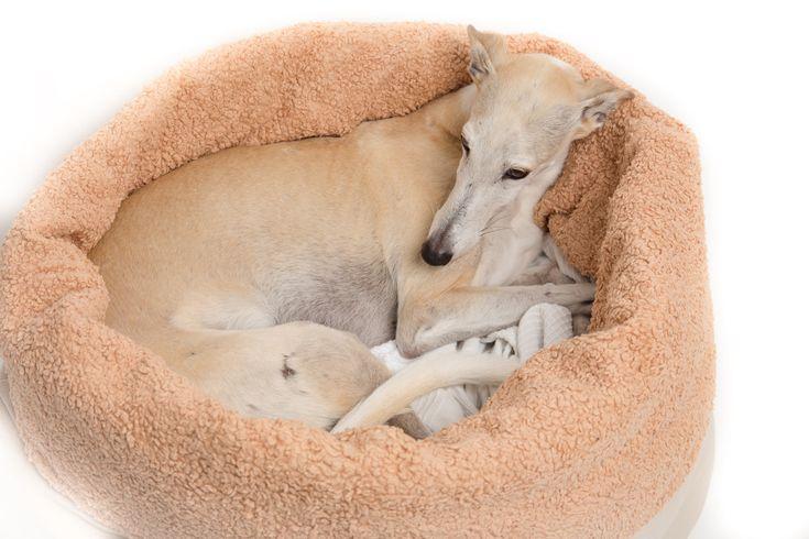Nähanleitung: Hundekuschelsack Meine Kreative Sei…