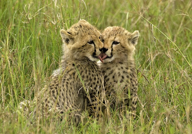 Top Flight Nature Photography: Photographing African wildlife with impact; Cuteness (part 3)