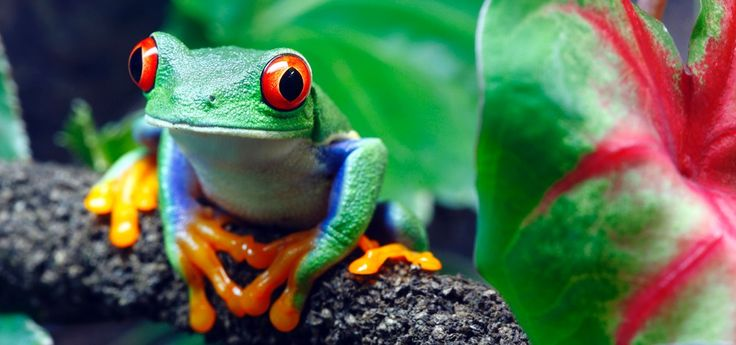 Costa Rica - Turismo de lujo, aventura y cultura | Matices Four Seasons