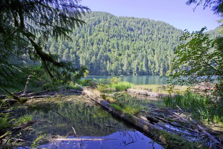 12 Stunning Natural Attractions on Vancouver Island | theculturetrip.com  Macmillan Provincial Park is home to two star attractions: Cameron Lake and Cathedral Grove.