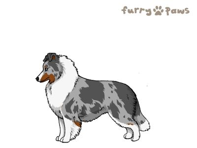 Furry Paws // UCH Kip's Into That Good Night [0STM 1.603] 12.5 573's Kennel