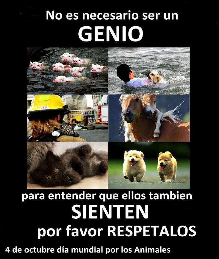 4 de Octubre día mundial por los animales !!
