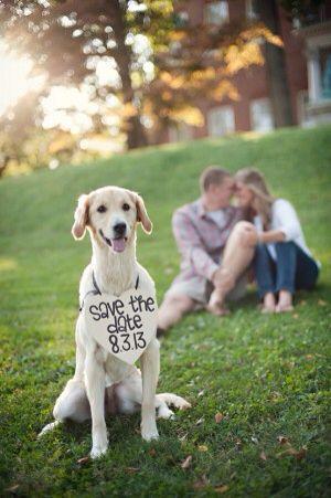 Hond voor bruiloft aankondiging
