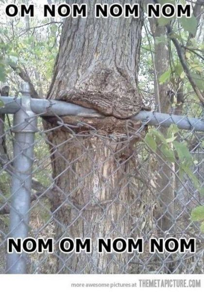 VERY Funny Pictures 014
