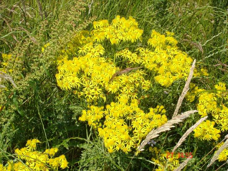 23 Best Tackling Weeds Images On Pinterest Weed Control