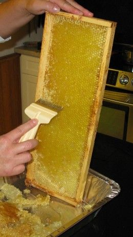 How to Extract Delicious Fresh Honey from Bee Hive Honey Frames   I want to get bees.