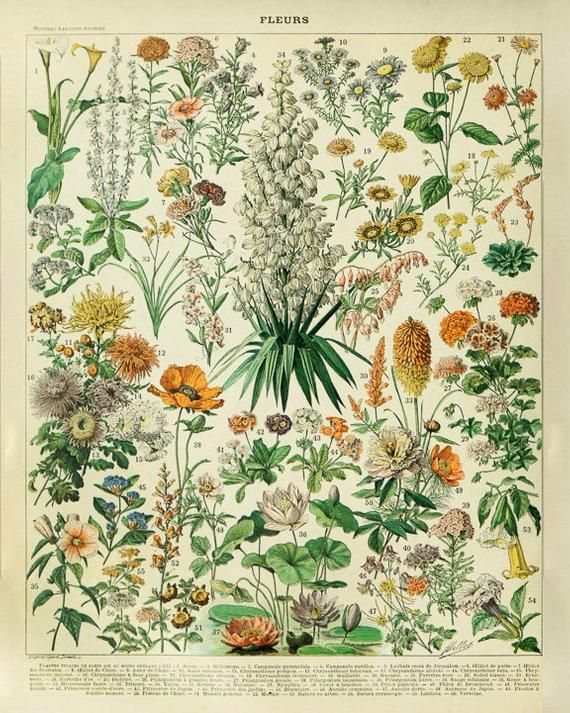 VINTAGE BOTANICAL POSTERS PRINTS Wall Art Home Flower Decor A4 A3 A2 Poster