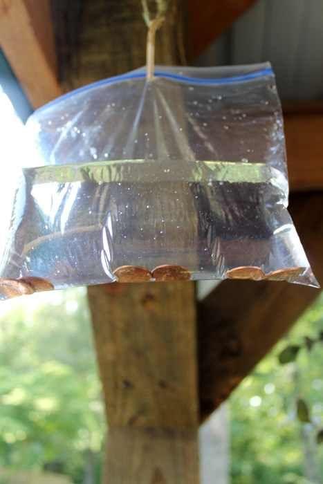 Se você se irrita com as moscas em casa, aqui está uma solução barata, inofensiva e eficiente!