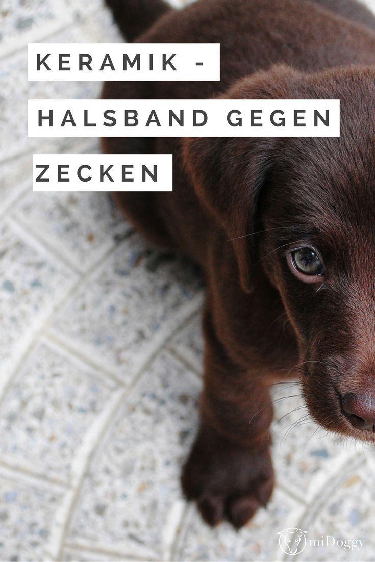 615 best diy f r hunde images on pinterest dogs. Black Bedroom Furniture Sets. Home Design Ideas