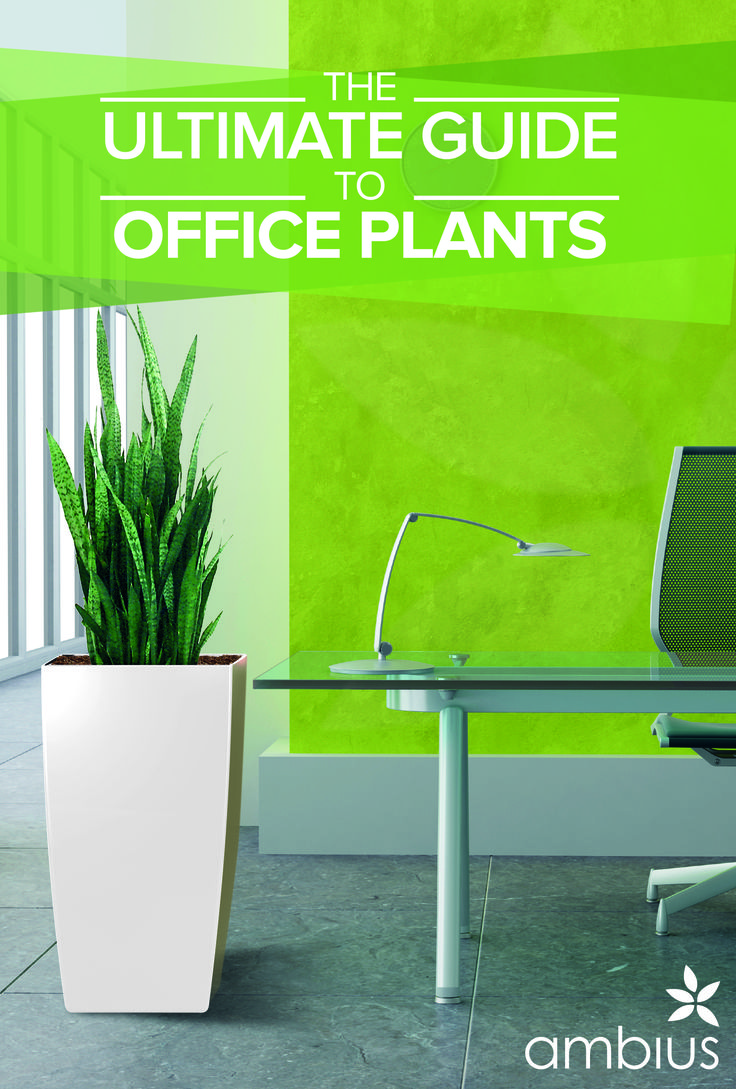 Choose Suitable Office Plants   Officials Operating In Their Cubicles Need  To Have Not Really Feel Undesirable About The Atmosphere, Now They Can  Decorate