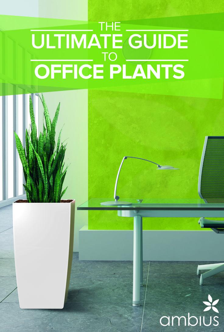1000 ideas about office plants on pinterest office