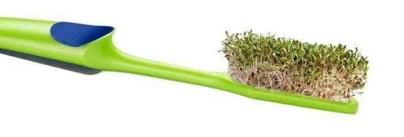 KLÍČENÍ MUNGA :: Klíčky a klíčení semen